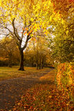 Beautiful and bright autumnal trees in Scottish park with afternoon sunlight. Royalty Free Stock Photo