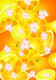 Beautiful bright background Stock Photography
