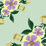 Beautiful bright background with delicate flowers Royalty Free Stock Images