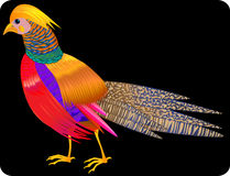 Beautiful,bright,bird,illustration Royalty Free Stock Image