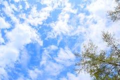 Blue sky at Krabi, Thailand. Beautiful and bright Blue sky at Krabi, Thailand, nice day stock images