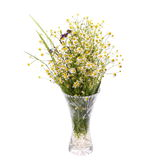 Beautiful bright bouquet of wild flowers chamomile in glass vase isolated on white Royalty Free Stock Photography