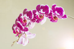 Beautiful bright branch of orchids on a light blurred background Stock Image