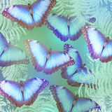 Beautiful bright butterflies stock photo
