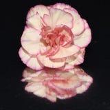 Beautiful bright closeup macro pink  flower. Beautiful closeup bright happy  flower macro pink Stock Image