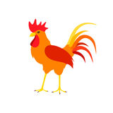 Beautiful bright cock on a white background. Royalty Free Stock Image