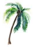 Beautiful bright cute green tropical lovely wonderful hawaii floral herbal summer pattern of a palm trees watercolor hand sketch royalty free illustration