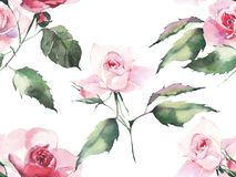 Beautiful bright elegant wonderful colorful tender gentle pink spring herbal rose with buds and green leaves pattern watercolor ha. Nd illustration. Perfect for Royalty Free Stock Images