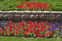 Beautiful bright flower beds in  park Stock Image