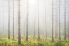 Beautiful bright forest with sunlight. And sun rays stock image