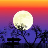 Beautiful bright full moon rise behind tree branches Stock Image