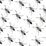 Beautiful bright graphic abstract cute lovely diagonal pattern of black ants watercolor Royalty Free Stock Images