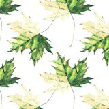 Beautiful bright graphic tender herbal floral autumn green and yellow maple leaves pattern watercolor hand illustration Royalty Free Stock Photography