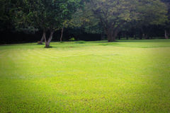 Beautiful bright green lawn & trees stock photos
