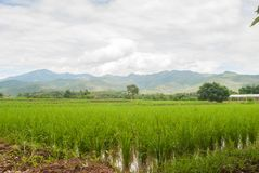 Beautiful bright green rice fields and scenic mountains . stock images