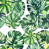 Beautiful bright green tropical wonderful hawaii floral herbal summer pattern of a monstera palms watercolor hand. Illustration Royalty Free Stock Photos