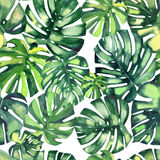 Beautiful bright green tropical wonderful hawaii floral herbal summer pattern of a monstera palms. Watercolor hand illustration Royalty Free Stock Photo
