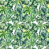 Beautiful bright green tropical wonderful hawaii floral herbal summer pattern of a monstera palms. Watercolor hand illustration Stock Photography