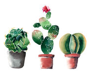 Beautiful bright herbal beautiful wonderful floral herbal gorgeous cute spring colorful three cactus in clay pots. Watercolor hand illustration royalty free illustration