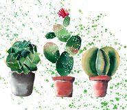 Beautiful bright herbal beautiful wonderful floral herbal gorgeous cute spring colorful three cactus in clay pots watercolor. Hand illustration with light green Stock Photo