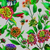 Beautiful bright lantana or brazil verbena flowers on gray background. Seamless summer floral pattern. Watercolor painting. Hand drawn illustration. Can be Royalty Free Stock Photos