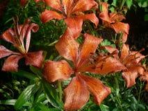 Beautiful flowers in the garden stock photo