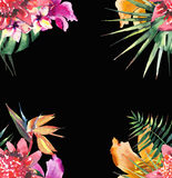 Beautiful bright lovely colorful tropical hawaii floral herbal summer frame of tropical flowers hibiscus orchids and palms leave. S on black background Royalty Free Stock Photos
