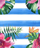 Beautiful bright lovely colorful tropical hawaii floral herbal summer pattern of tropical flowers hibiscus orchids and palms leave. S on blue lines background Royalty Free Stock Images