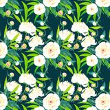 Beautiful bright lovely sophisticated white peonies pattern on navy background watercolor. Hand illustration Stock Image