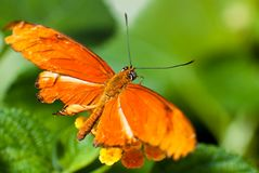 Beautiful bright orange butterfly Stock Image