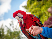 Beautiful bright parrot Royalty Free Stock Images