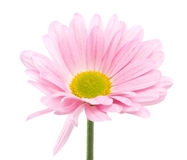 Beautiful bright pink flower Stock Photos