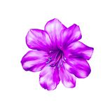 Beautiful bright pink Flower. Isolated on white Stock Images