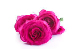 Beautiful bright pink roses Royalty Free Stock Photo