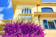 Beautiful bright purple flowers on a yellow building Royalty Free Stock Image