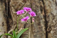 Beautiful bright purple orchid stock photos