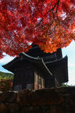 Beautiful bright red autumn foliage over an old Japanese temple Stock Photo