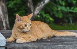 A beautiful bright red kitten with yellow eyes and pink nose on an old gray wooden boards background in a summer garden stock photography