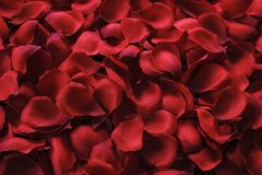 Beautiful bright red rose petals on wooden background. Happy valentines day oliday sales concept. Romantic happy valentines day greeting card, wedding Stock Image