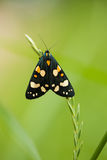A beautiful, bright spotted butterfly sitting on a grass in summer evening. Stock Photos