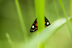 A beautiful, bright spotted butterfly sitting on a grass in summer evening. Macro shot royalty free stock image