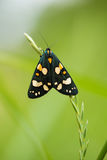 A beautiful, bright spotted butterfly sitting on a grass in summer evening. Macro shot royalty free stock images