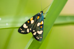 A beautiful, bright spotted butterfly sitting on a grass in summer evening. Macro shot royalty free stock photography