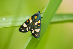 A beautiful, bright spotted butterfly sitting on a grass in summer evening. Macro shot stock images