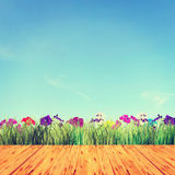 Beautiful bright summer background with flowers Royalty Free Stock Photography