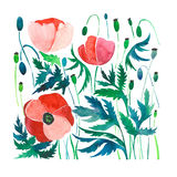 Beautiful bright summer pattern of red poppies with green leaves and heads. Watercolor hand sketch Royalty Free Stock Photography