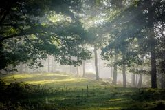 Early morning in the forest, mist and sunbeams shine beautifully through the trees,. Beautiful bright sunbeams make their way through the morning mist in fantasy stock photo