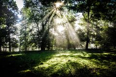 Early morning in the forest, mist and sunbeams shine beautifully through the trees,. Beautiful bright sunbeams make their way through the morning mist in fantasy royalty free stock image