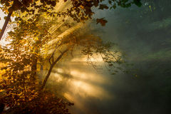 Beautiful bright sunbeams make their way through the morning mist and the foliage of trees. Picturesque landscape.