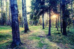 Beautiful bright sunset in a wild forest, beautiful scenery, nat stock images